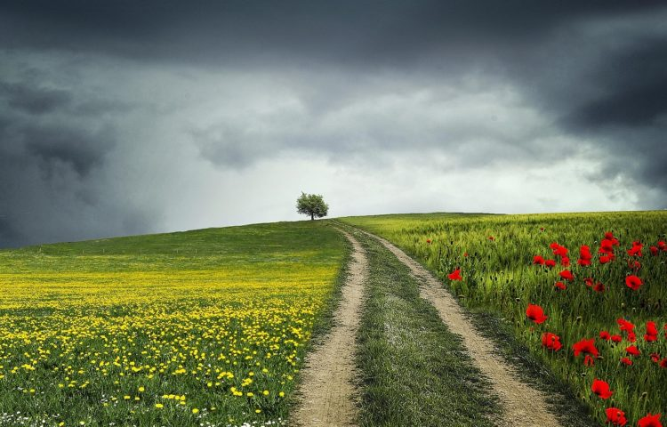Cómo encontrar el equilibrio emocional